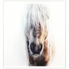 Cadre tête de cheval Palomino