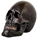 Crâne noir