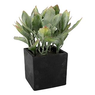Mini plante verte