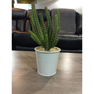 Cactus 8 po