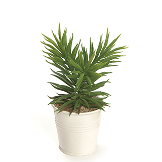 Plante dans pot blanc