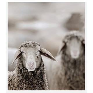 Jeté avec moutons 55x63po
