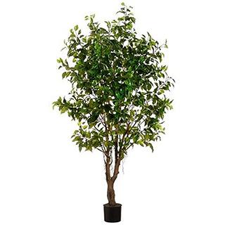 Ficus artificiel de 6pi