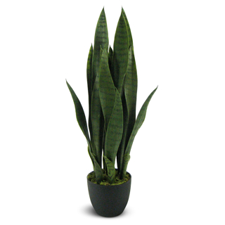Plante décorative Sanseveria 28 po
