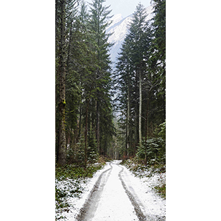 Murale autocollante Route des pins 4x8pi