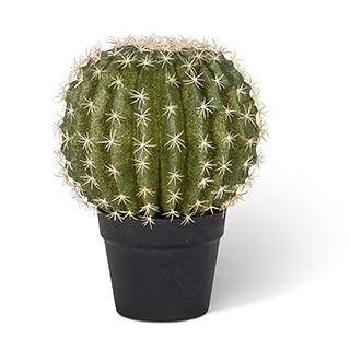 Cactus décoratif - Moyen