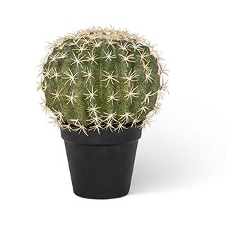 Cactus décoratif - Petit