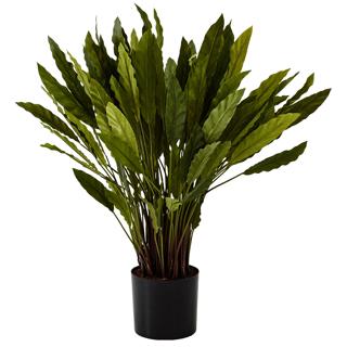 Plante décorative Calathea 34 po