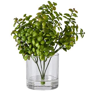 Plant De Jade