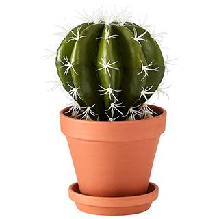 Cactus boule