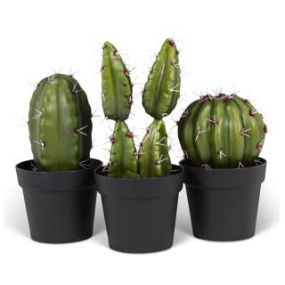 Ensemble de 3 cactus