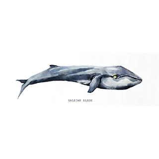 Toile Baleine