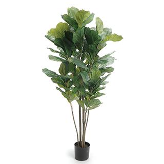 Plante arbre