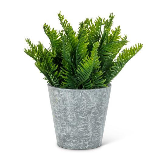 Plante décorative